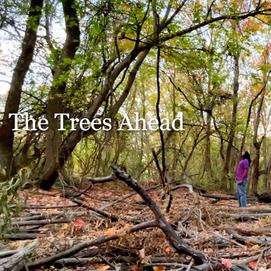 THE TREES AHEAD