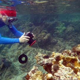 Barbara Crites: Snorkeling St John, USVI
