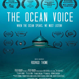 THE OCEAN VOICE