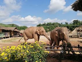 Camp éléphants Chiang Rai By Thaïlande E