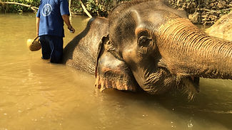 Camp réhabilitation éléphants Chiang Mai