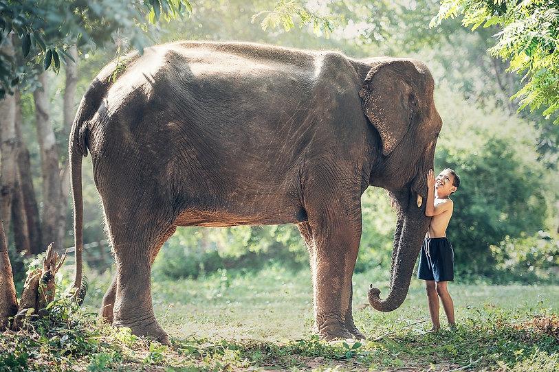 parrainer un éléphant Association Un j