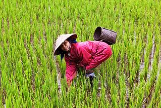 VIETNAM A LA FOLIE THAILANDE EVASION.png