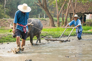 ECO LODGE BY THAILANDE EVASION.jpg