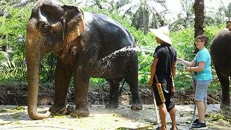 Camp réhabilitation éléphants Krabi By T
