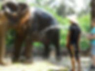 activité-krabi©thailandeevasion