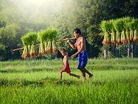 rizière_cambodge©thailandeevasion