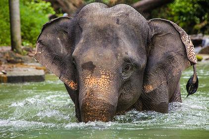 parrainer un éléphant Association Un jou