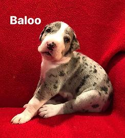 carpo liza 3 wks Baloo.jpg