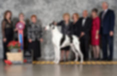 Top 20 show dog Henry Kissinger - Dog show handler