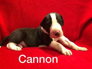 Carpo Liza 3 wks Cannon.jpg