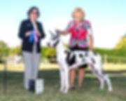 Praia - our harlequin puppy winning her first point