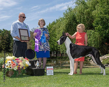 Carpo WD GDCNC specialty 2019.jpg  From the American Bred dog class