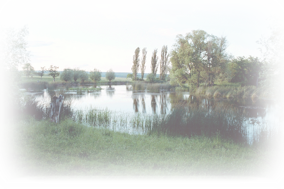 teich.png