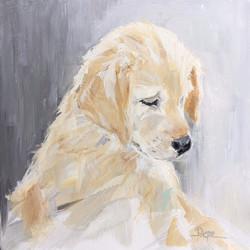 Yellow Labrador 001