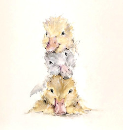 Duckling Stack 001