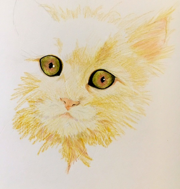 Colored Pencil Cat 001