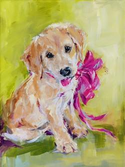 New Puppy 001
