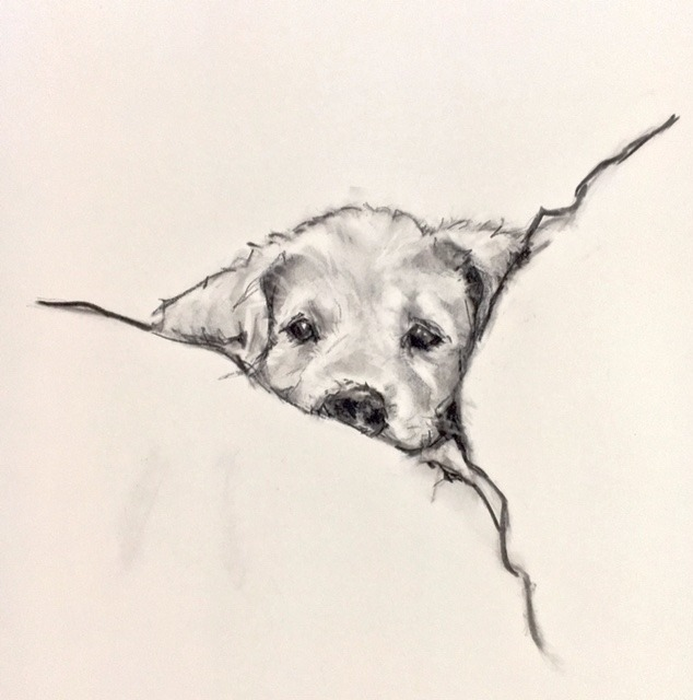Charcoal Drawing Puppy 001