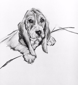 Charcoal Drawing Puppy 002