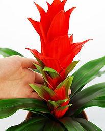 plantas-artificiales-guzmania-ranka-espa