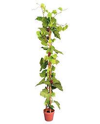 plantas-artificiales-vid-con-uvas-ranka-