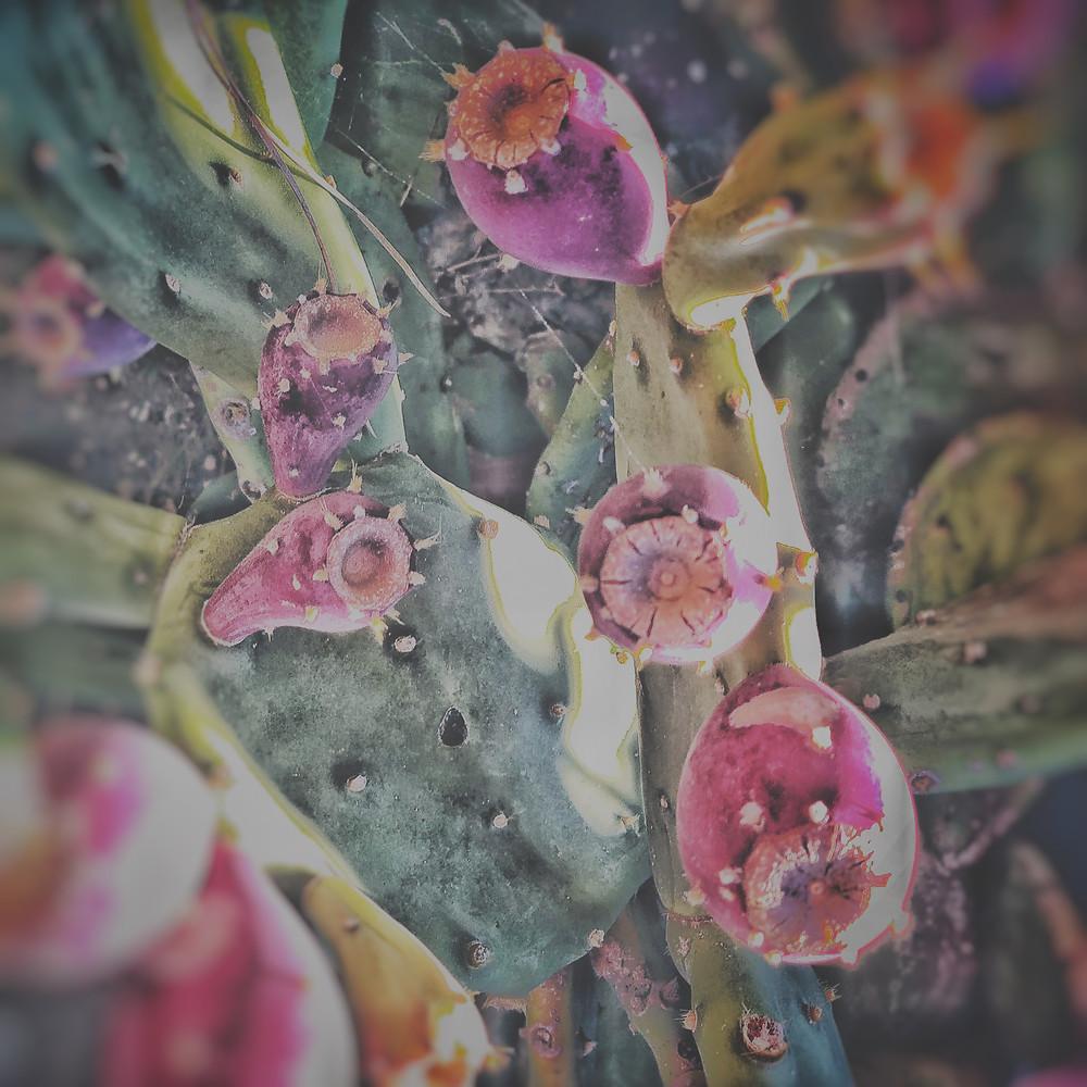 #walking #walkingaround #naturephotography #montalcino  #brunellocrossing #valdorcia #tuscany #livingtuscany #underthetuscansun ##igerssiena #fico #ficodindia #greenery #wallpaper #homerdecor #interior #interiordesign #design #designinspiration ##natureinspired