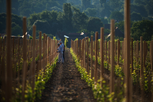 Pfalz - Wine+Flavours+Landscape+Details