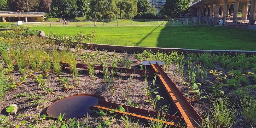 Regnparken och Skyfallsdammen: Dagvattenhantering i Rålambshovsparken