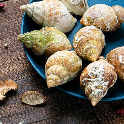 法國[熟]黃金螺. 翡翠螺 (500G/包)
