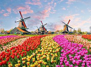HollandTulips.jpg