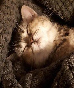 Slapend kitten Jaia.jpeg