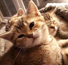 Wakker kitten Jaia.jpeg