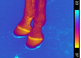 Thermographic image on smart-phone