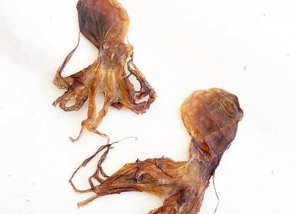 Mini Octopus
