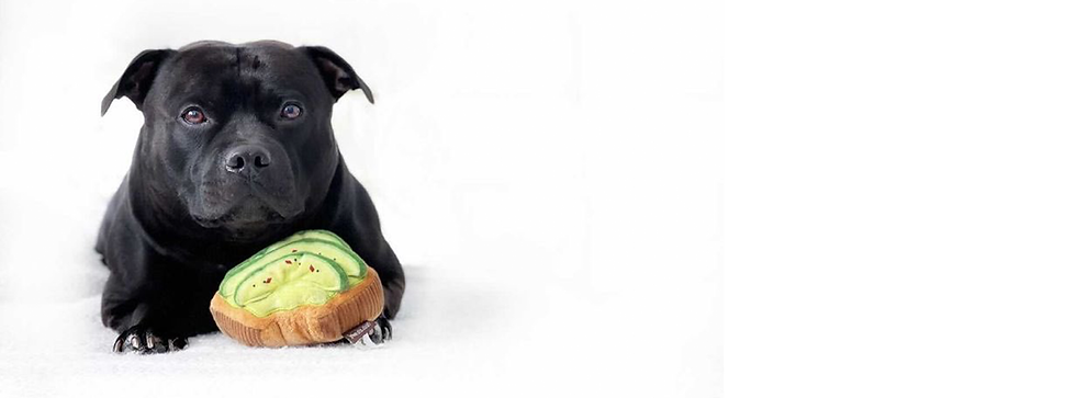 staffy with toy 1.png