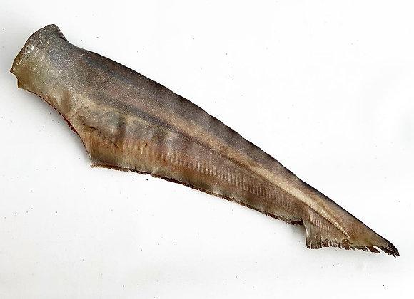 XL Shark Tails