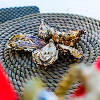 Beautiful Porlock Bay Oysters