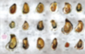 types of oysters.jpg