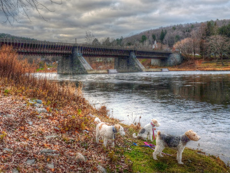 Walking Back in Time Along the Delaware Canal Towpath