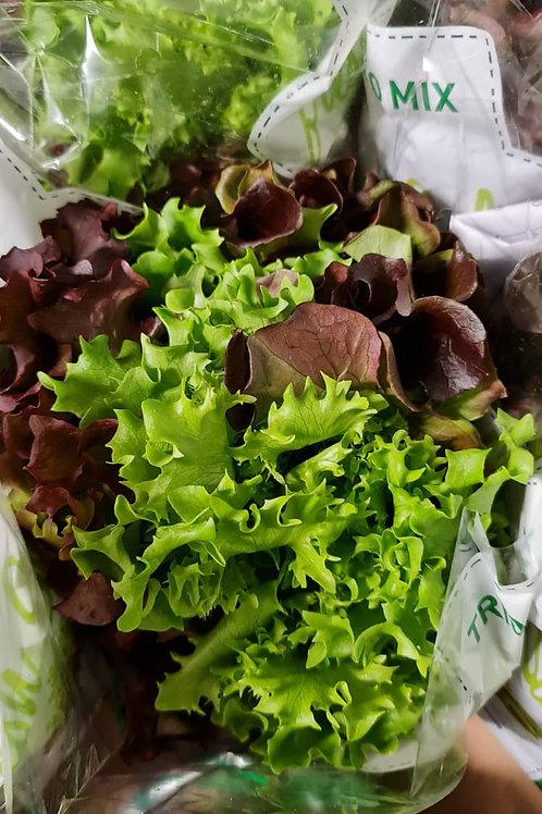 Trio Salad (Oakleaf, Lolo Rosso & Lolo Biondo)