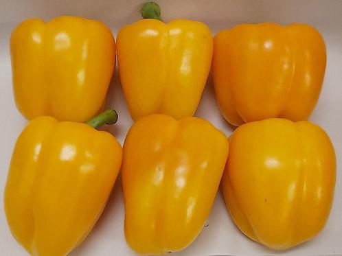 Pepper Yellow each