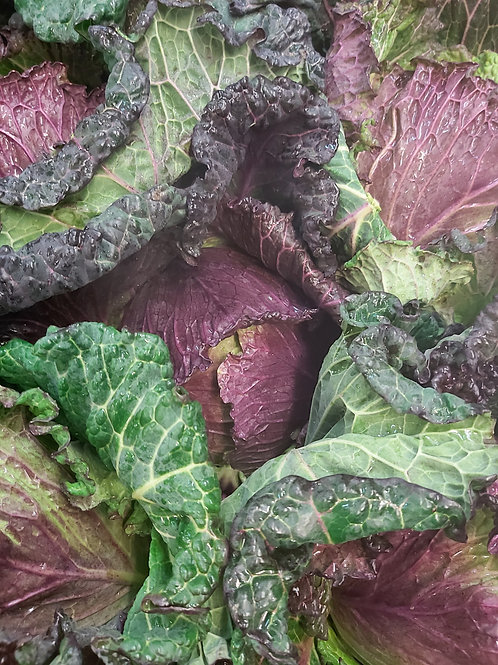 January King cabbage
