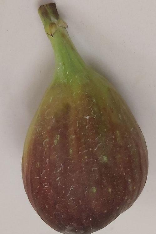 Fig pack 4