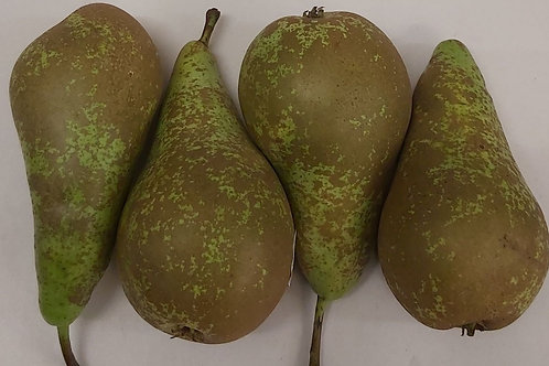 Conference Pear pack of 4