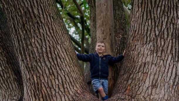 Levi up Tree