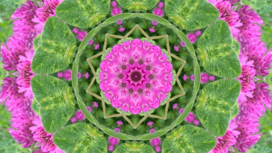 Personalised Flower/Plant Sound Mandala