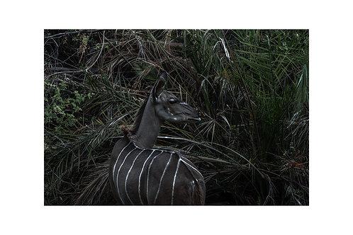 Okavango 5