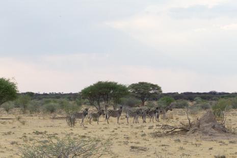 Namibie-Botswana - FX Richard Photograph