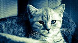 kittenfront
